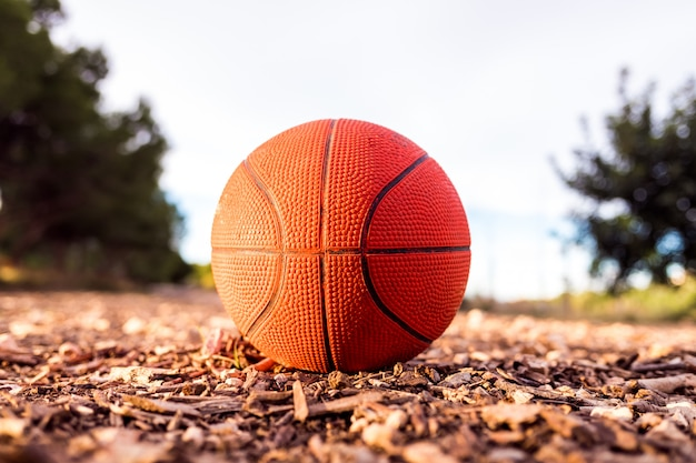 Small basketball ball on the ground of a forest.