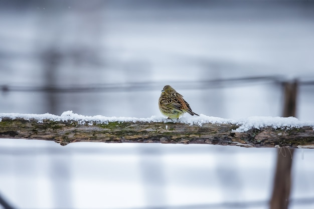 Small bird on a branch in winter