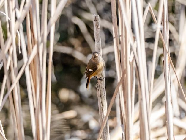 森の中の小鳥
