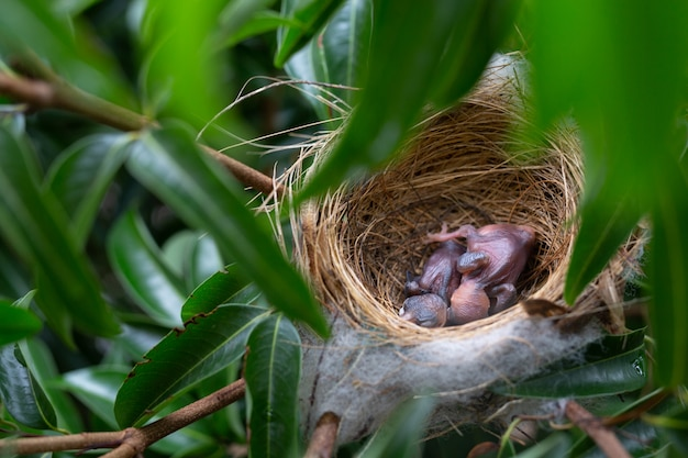 A small bird in the nest on a tree.