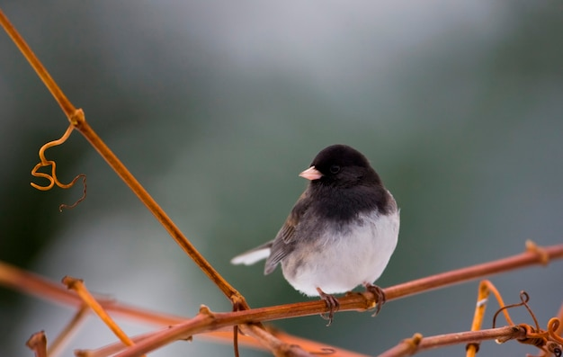 Small bird perching on vine