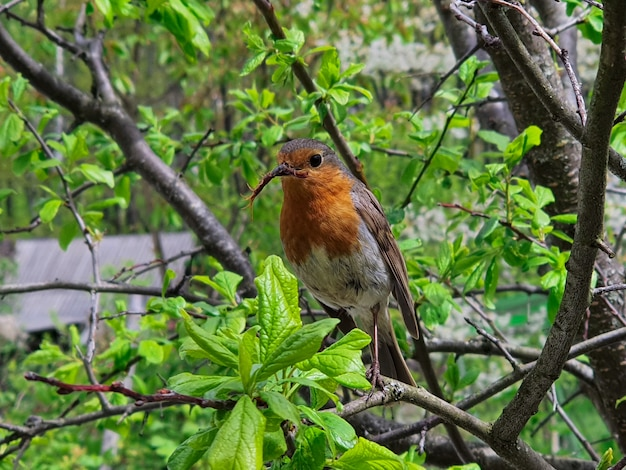 A small bird sits on a tree with an insect in its beak.