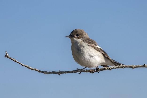 Small bird sitting on branch close up