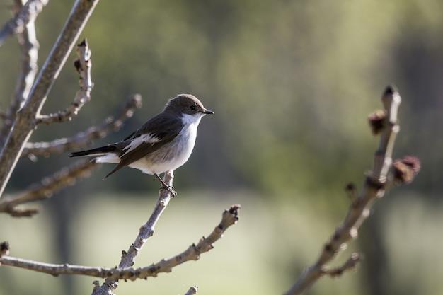 木の枝に座っている小さな鳥