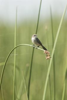 Маленькая птичка стоит на высоком листе травы
