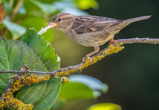 Small birds of different colors and different songs brighten the summer