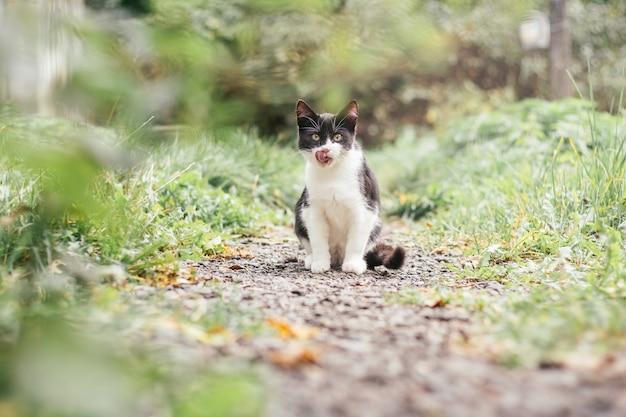Маленький черно-белый котенок 4 месяца сидит на дорожке и облизывает губы среди размытой зеленой травы