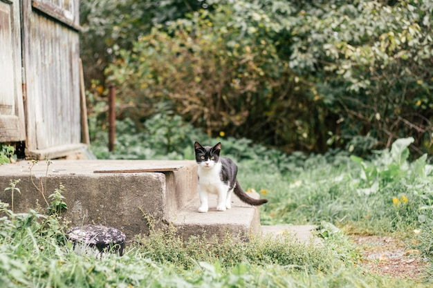 Маленький черно-белый котенок 4 месяца стоит на бетонных ступенях старого дома, среди размытой зеленой травы
