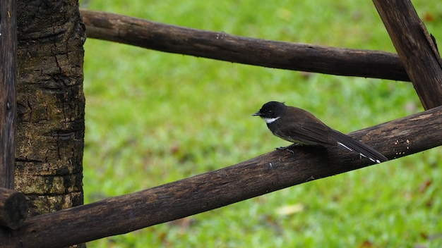 A small black bird lies on a branch. can be edited or added to your work.