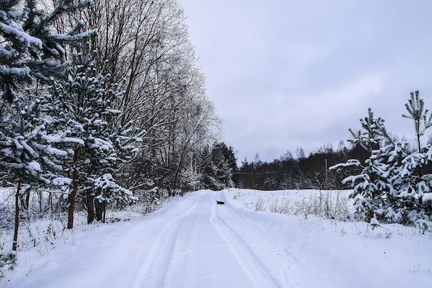 冬の日に村の道路に沿って走っている小さな黒い犬。
