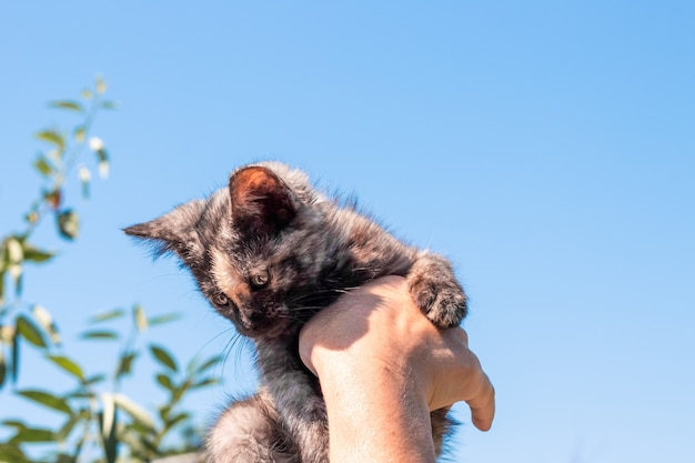 Small black kitten in hands on a background of the sky. care and raising of pets.