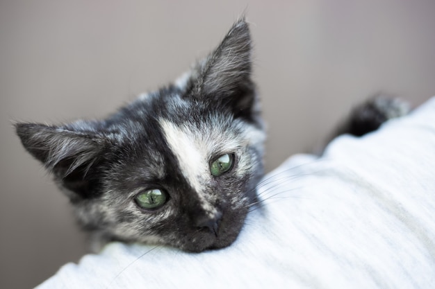 A small black kitten looks out over the man's shoulder. favorite cute pets.