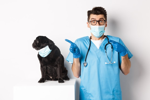 Small black pug dog in medical mask looking left at copy space while sitting near doctor veterinarian in vet clinic, standing over white.