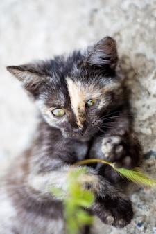 작은 검은 점박이 새끼 고양이는 푸른 잔디와 함께 논다. 좋아하는 애완 동물.