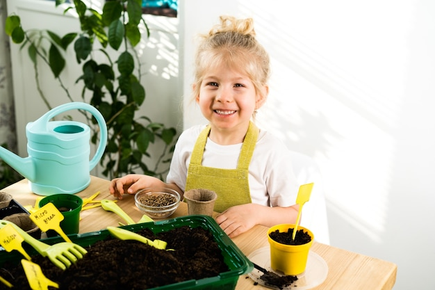 A small blonde girl in an apron is engaged in planting seeds for seedlings, smiling, the concept of children's gardening.
