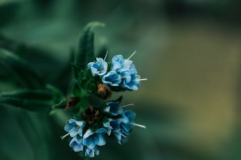 Small blue flower bunch on plant