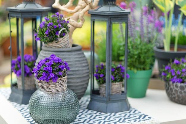 装飾的な要素を持つテーブルの上の植木鉢の小さなブルーベルカンパニュラ