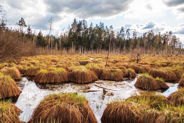 Болото болото болото заболоченное место и зеленый лесной пейзаж.