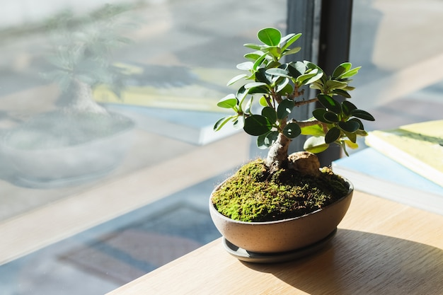 Small bonsai on wood table at window.
