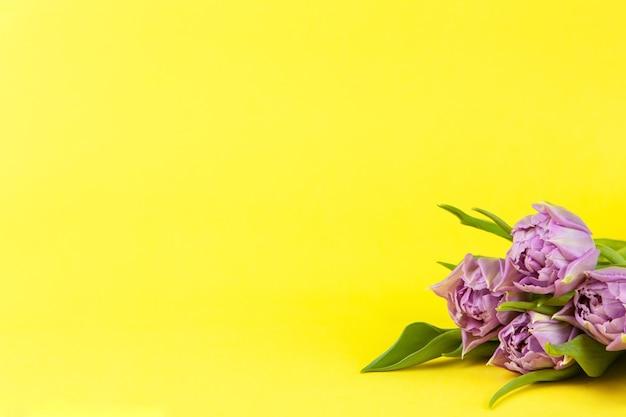黄色の壁、コピースペース、側面図、クローズアップのライラックチューリップの小さな花束。水平