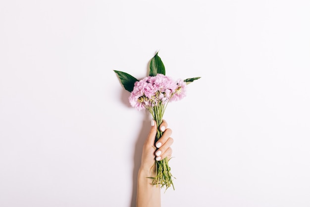 Small bouquet of pink carnations in a female hand with a manicure on white