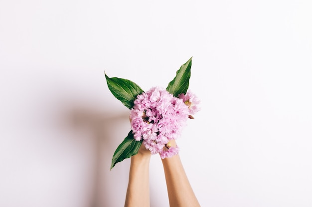 Small bouquet of pink carnations in female hands on white