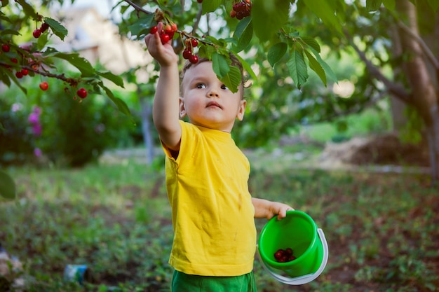 A small boy, an infant, in a bright yellow t-shirt collects a sweet cherry on the precinct.