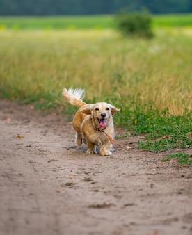 Собака небольшой породы работает на открытом воздухе. счастливая прогулка собаки. собака на природе. мелкие породы.