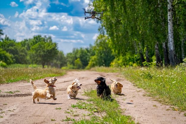 На улице гуляют собаки мелких пород. четыре собаки на фоне зеленой природы.