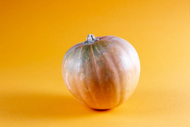 Small bright yellow pumpkin to the yellow background. autumn concept, modern style food picture