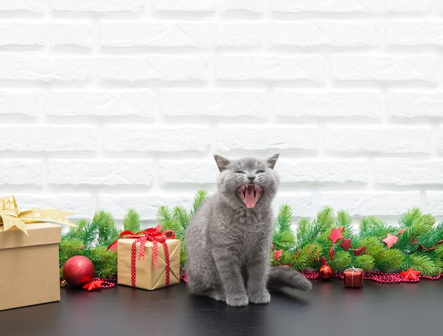 Small british kitten with christmas decoration