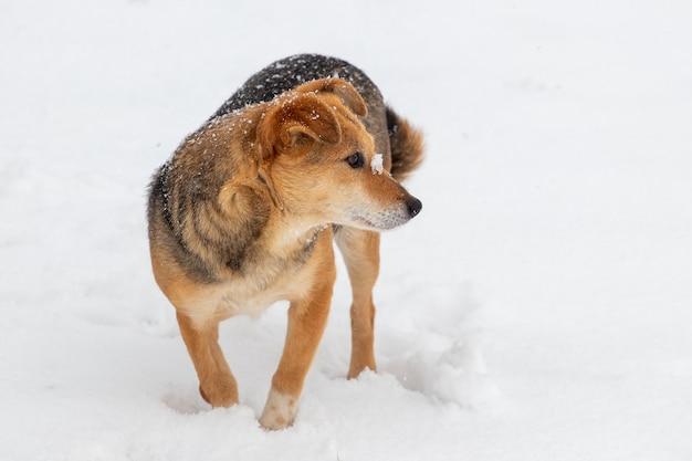 雪の中で冬の小さな茶色の犬