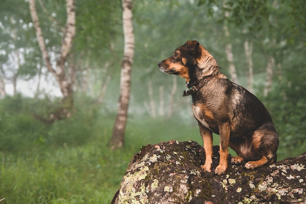 Small brown dog sits on a crooked birch trunk.