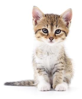 分離された小さな茶色の子猫
