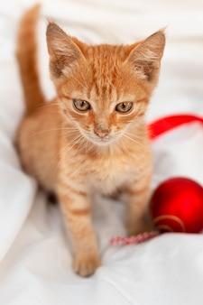 赤いおもちゃの小さな茶色の子猫は白い毛布の上に座っています