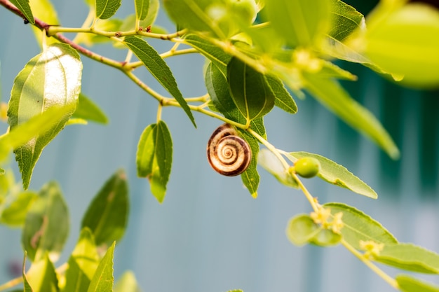 Small, brownish wild snails clinging to the grass in tropical forests