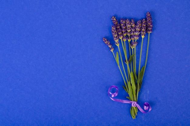 Небольшой букет из голубых цветов лаванды. студийное фото