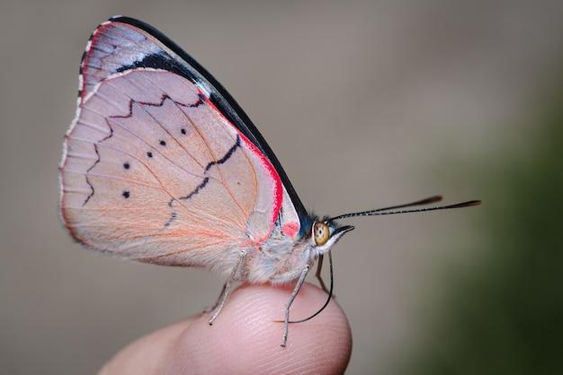 人の指にとまる小さな蝶0