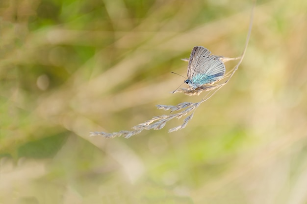 Small butterfly sits on a grass.