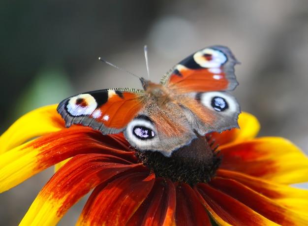 Маленькая бабочка сидит на цветке в летнем поле