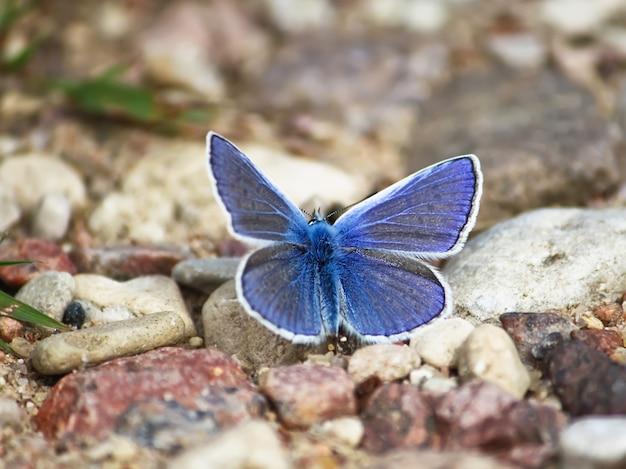 Маленькая бабочка сидит на дороге в летнем парке