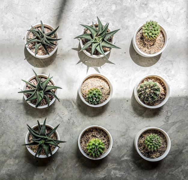 Small cacti on the floor