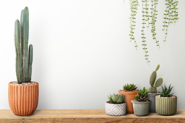 Small cacti with a white wall background