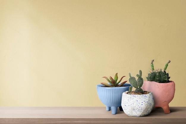 Piccoli cactus con uno sfondo di muro giallo