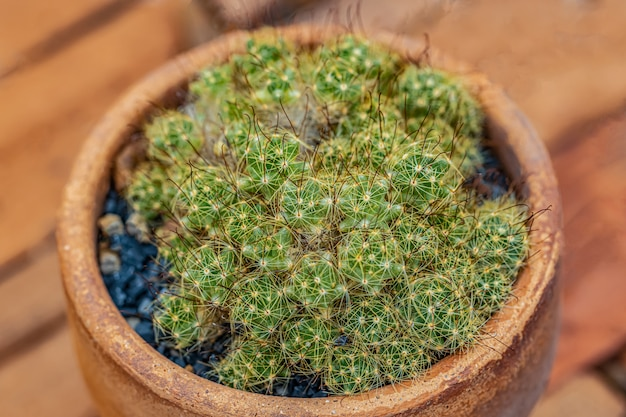 Small cactus and desert plants