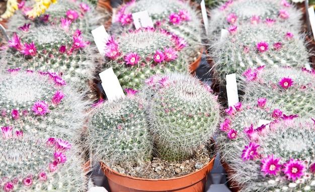 화창한 날 시장에 있는 작은 선인장 식물
