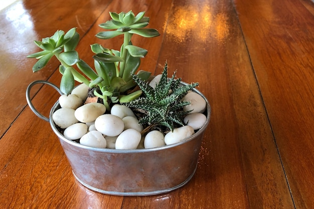 Small cactus in pot on wood table for the home decoration