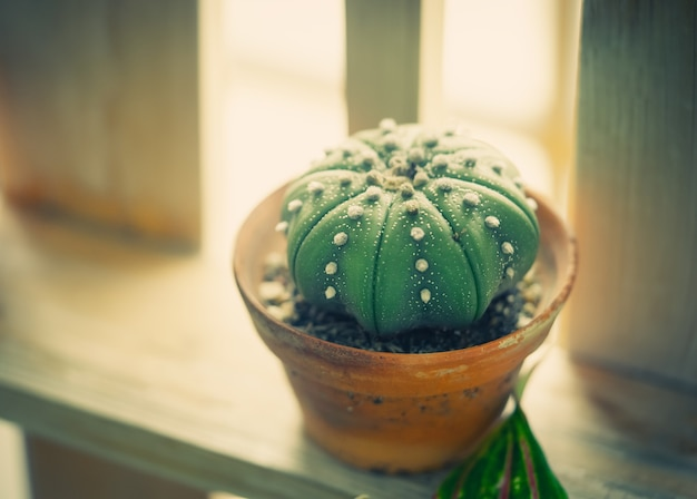 Small cactus pot on wooden table