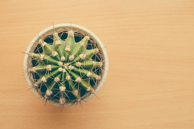 Small cactus on the table. top view. free space.