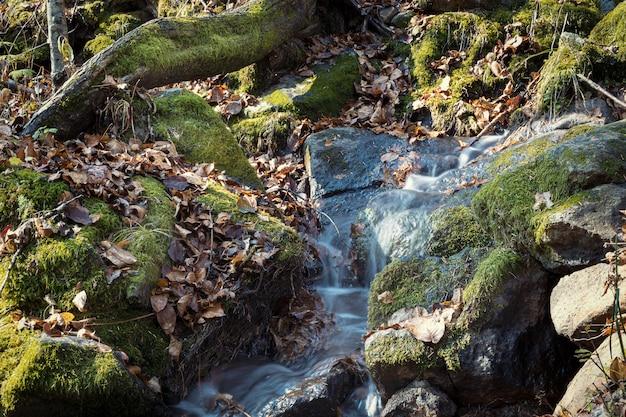 Небольшой каскад в осеннем сезоне красит в лесу камни и деревья, покрытые мхом